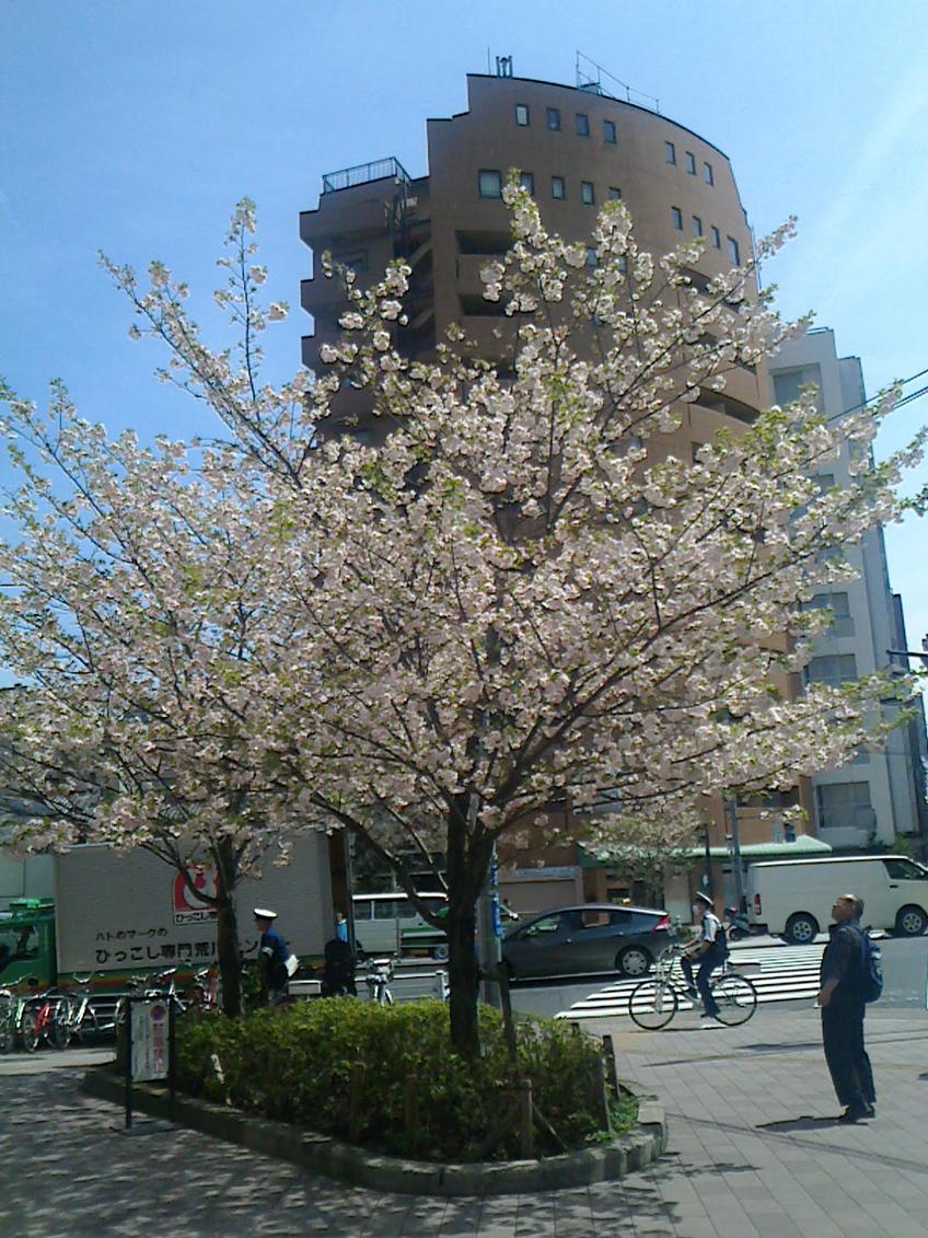 みちびき花の辻商店街・界隈